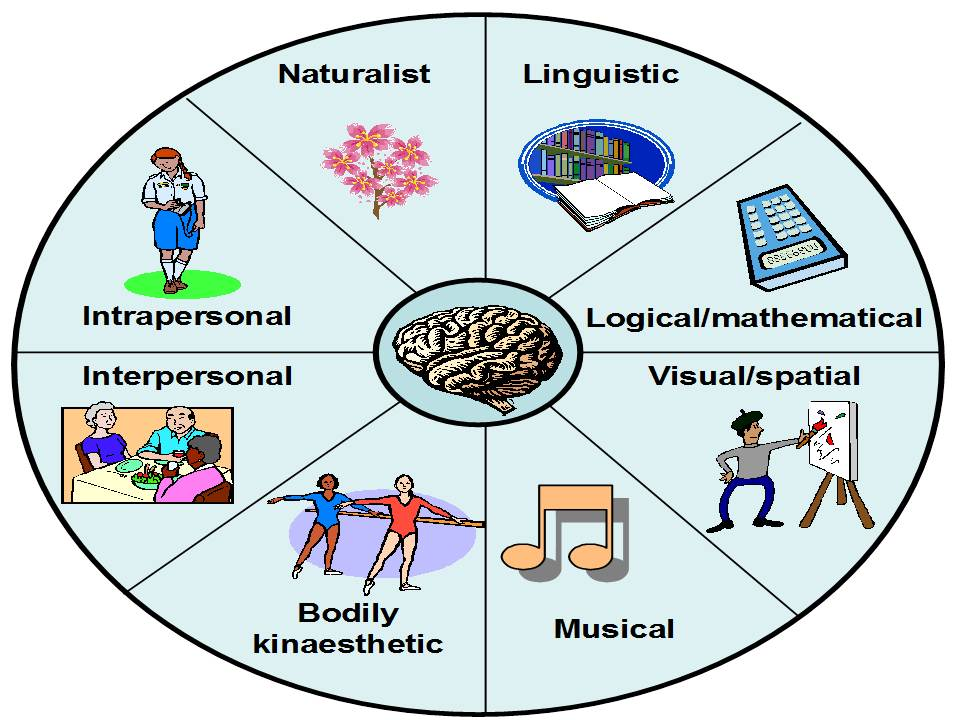 types of intelligences The theory of multiple intelligences differentiates human intelligence into specific 'modalities', rather than seeing intelligence as dominated by a single general ability.